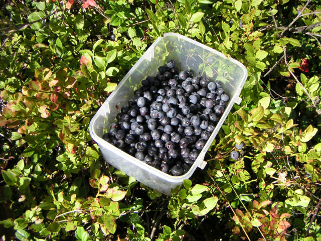 fruit picking job australia