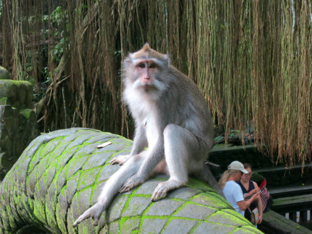 things to do ubud monkey