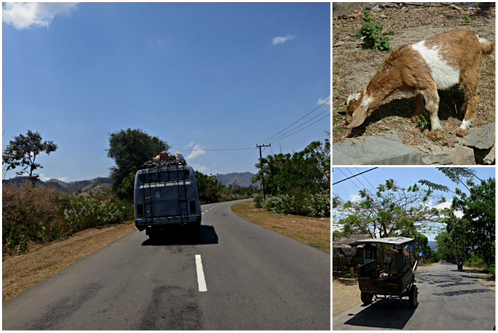 Sumbawa has lots of goats and crazy drivers.