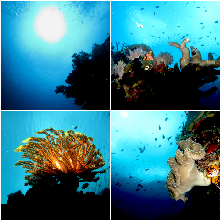 Wakatobi is one of the most famous spots for diving in Indonesia.